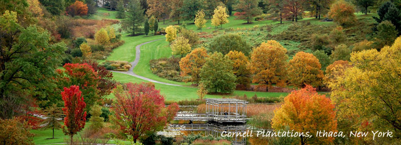 Finger Lakes Foliage & Leaf Peeping