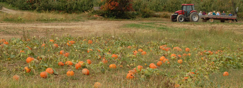 Finger Lakes Pumpkin Patches