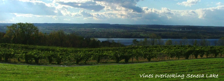 About the Finger Lakes Region--get started here!