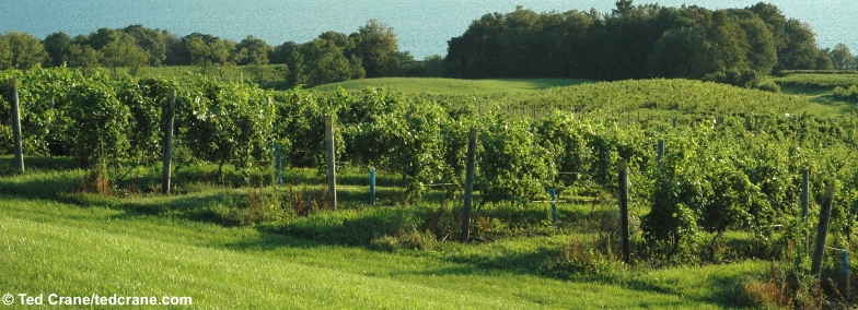 Seneca lake wineries a directory of finger lakes for Finger lakes fishing report